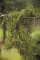 SPANISH MOSS GREEN 1.24 CUBIC FT BX