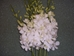 BOX OF 6 BUNCHES OF WHITE DENDROBIUMS- THIS SPECIALLY PRICED BOX IS FOR SPECIAL INTERNET ONLY PURCHASE!