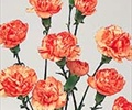 CARNATION-MINI-ORANGE 10 STEMS