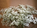 BOX OF 13 BUNCHES OF MILLION STAR BABYS BREATH- THIS SPECIALLY PRICED BOX IS FOR SPECIAL INTERNET ONLY PURCHASE! Babys Breath, Wedding Flowers, Cheap Wedding Flowers, DIY wedding Flowers