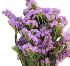 STATICE-LAVENDER GROWER BUNCH