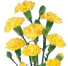 MINI CARNATION YELLOW  10 STEM