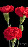 MINI CARNATION RED 10 STEM