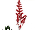 ASTILBE-RED 10 STEMS