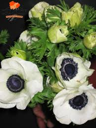 ANEMONE-WHITE 10 STEMS