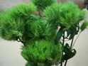 DIANTHUS GREEN TRICK 10 STEMS